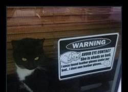 Enlace a En otra vida, esta gata fue agente secreto o algo...