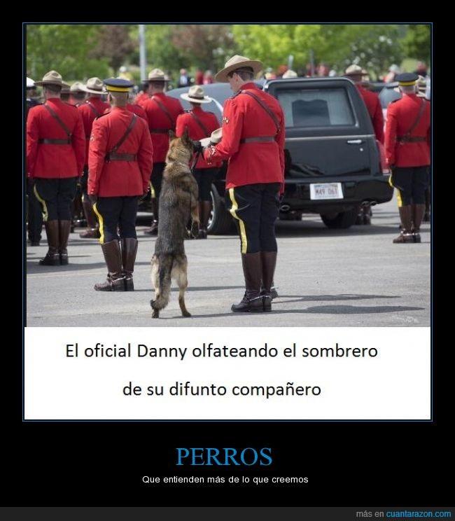 compañero,difunto,muerto,oler,olfatear,perro,policia,sombrero