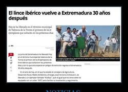 Enlace a ¡Si vas por Extremadura puedes encontrarte algún lince!