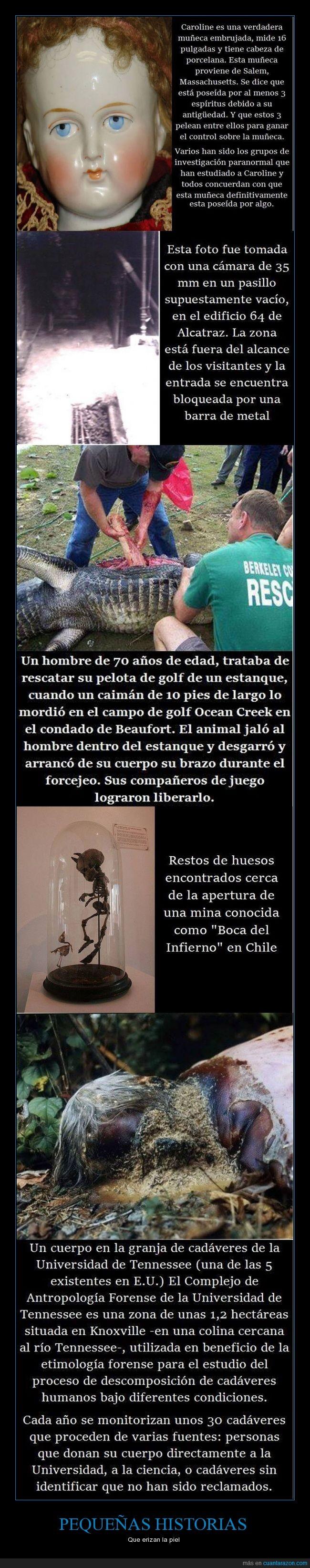 caimán,Chile,criaturas,escalofriante,fantasmas,muñecas,Terror