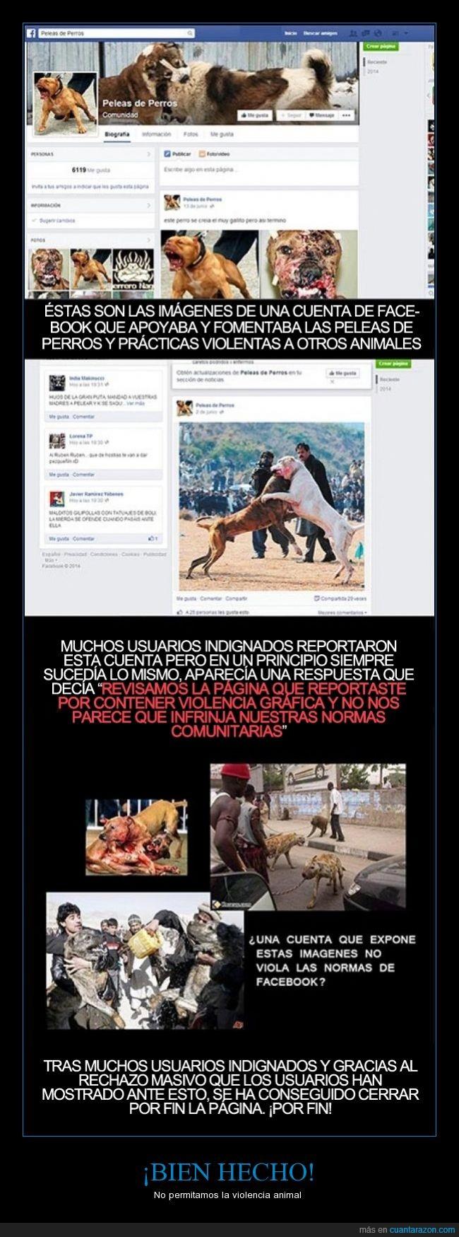 animal,cruel,facebook,fotografia,imagen,norma,peleas,perro,violencia,violenta