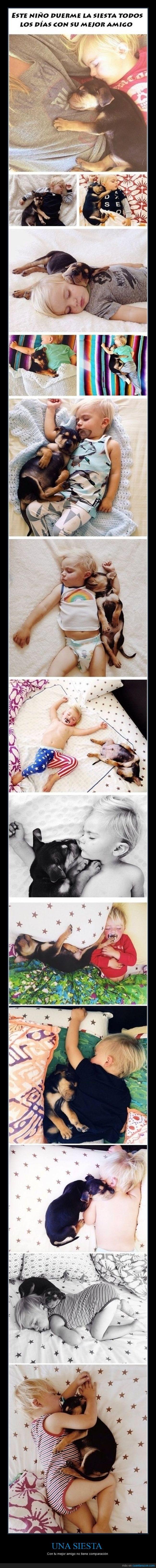 Adorable,Así me ha dado sueño,bebé,dormir,Niño,Perro,Siesta
