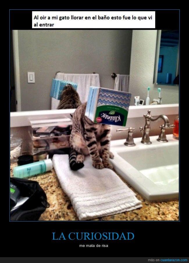 baño,cabeza,caja,demtro,gatos,Kleenex