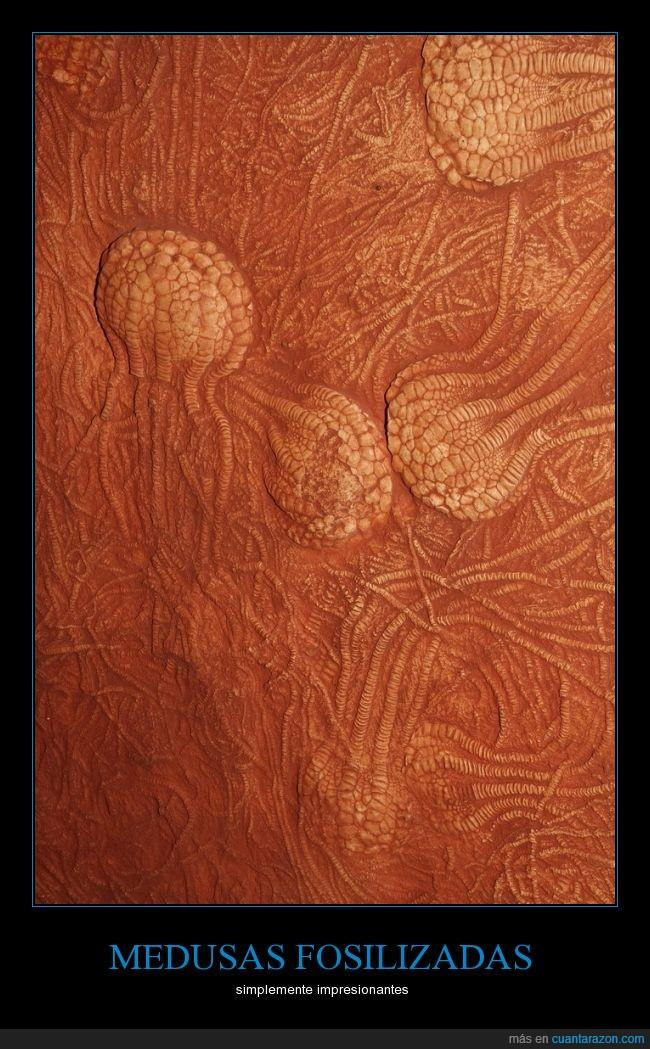 animal,estructura,fosil,fosilizada,medusas,tiempo,tierra