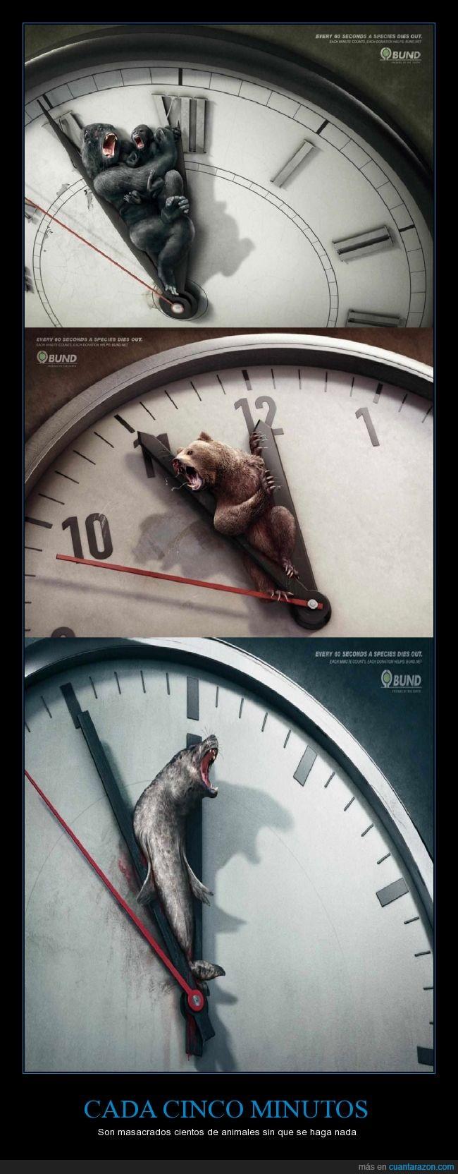 agujas,animales,caza,crueldad,extinción,focas,reloj,salvajes