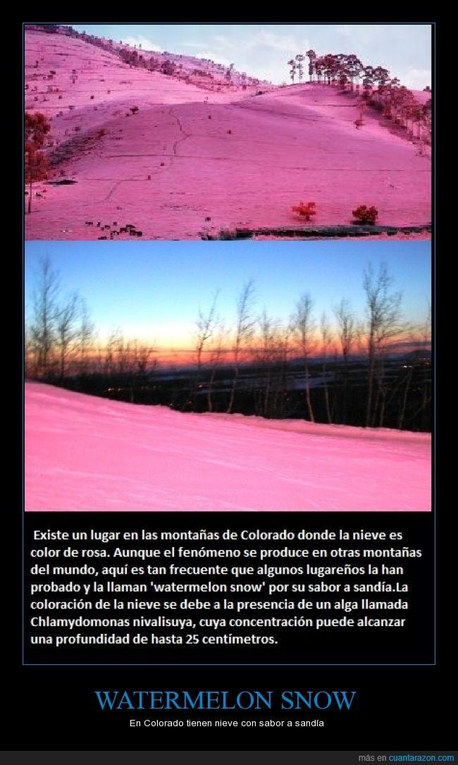 color,colorado,granizado,Nieve,rosa,sabor,sandía