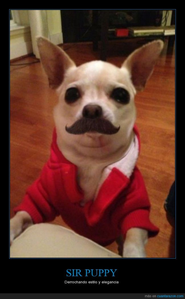 bigote,camisa,can,humor,mustache,padre,perro