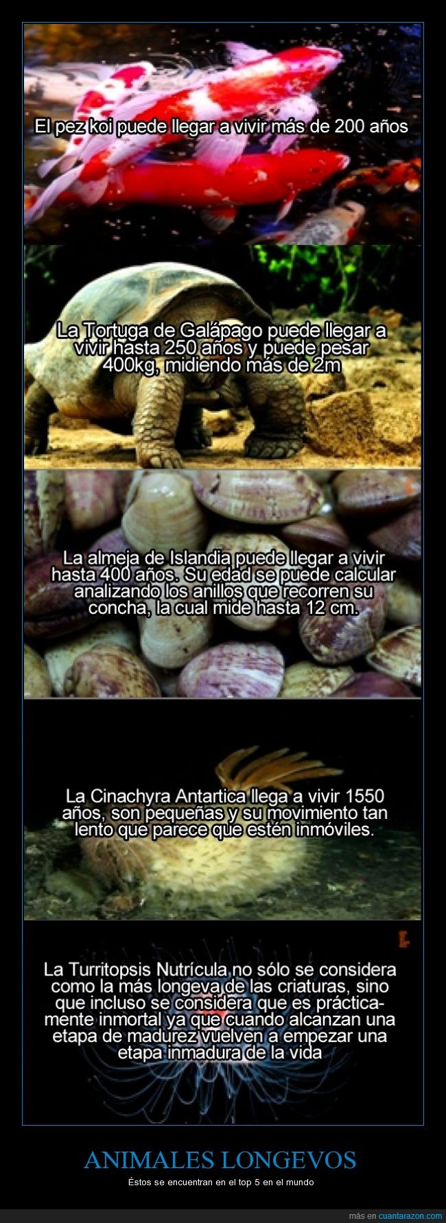 almeja,animales,años,inmortal,longevo,medusa,pez,tortuga
