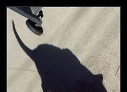 Enlace a Es irónico que la sombra de este gato sea así...