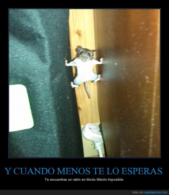 atrapado,esconderse,huida,ratón