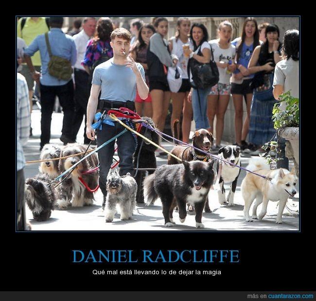 daniel radcliffe,fumar,harry potter,muchos,pasear,perros,vida