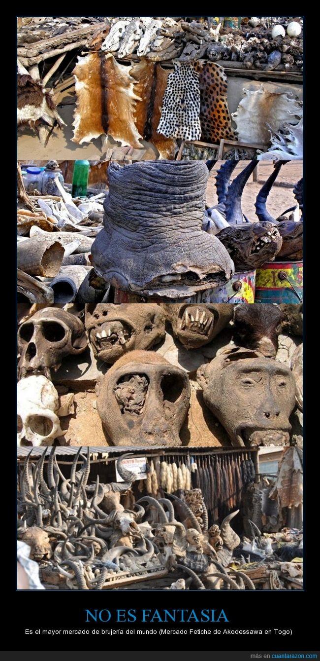 africa,akodessawa,animal,brujeria,elefante,hueso,humano,magia negra,matar,mercado,muerto,togo
