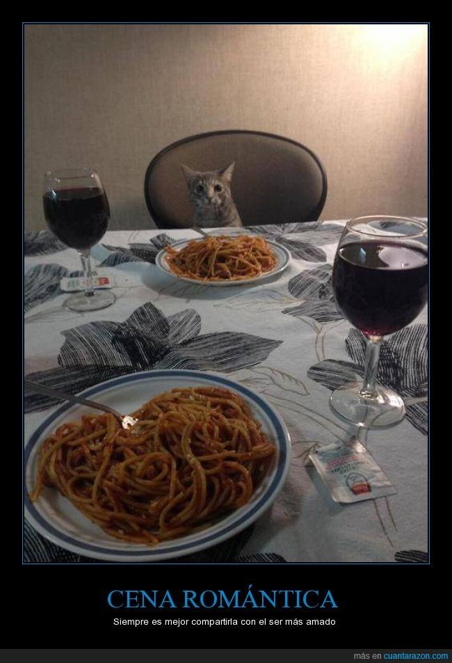 cena,cita,gato,hombre,romance,romantico,sofisticado,tierno