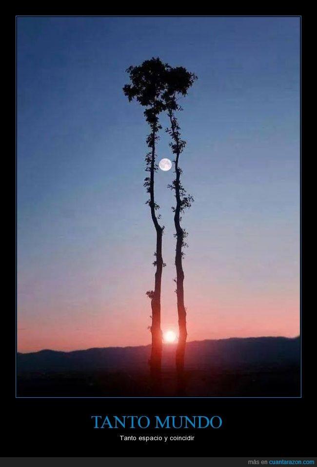 alba,amanecer,arbol,belleza,fotografía,hueco,luna,momento,sol