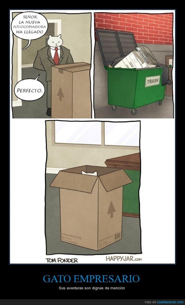 absurder,caja,cartón,empresario,fotocopiadora,gatete,gato,jugar,mierder