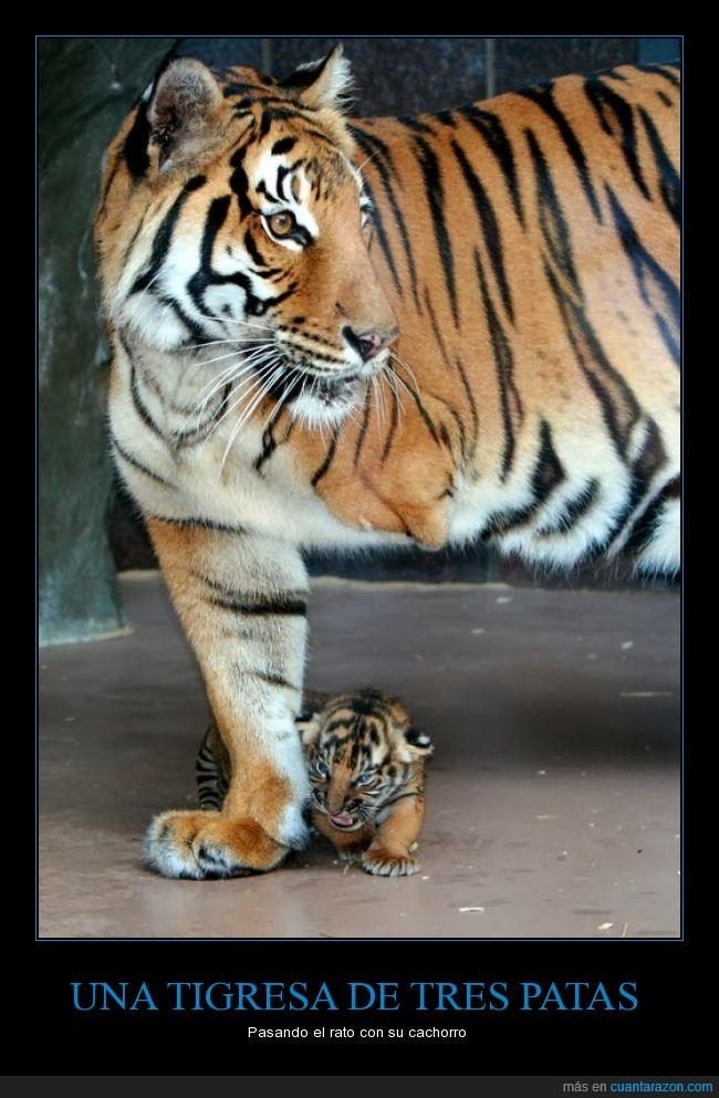 amor,cachorro,madre,maternidad,patas,sobrevivir,valiente