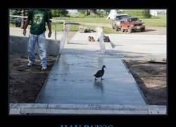 Enlace a El pato anarquista