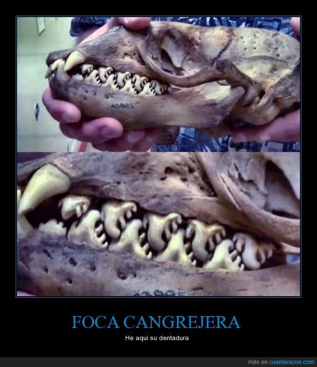 aprender,asco,dientes,dientes con dientes,menuda dentadura,raros,solo come cangrejos
