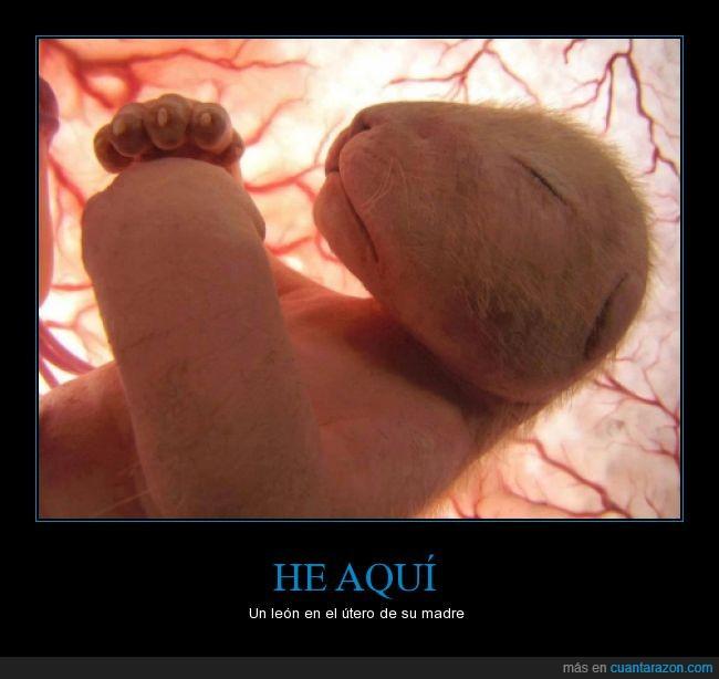 ecografia,feto,león,maravillas de la naturaleza,útero de la madre