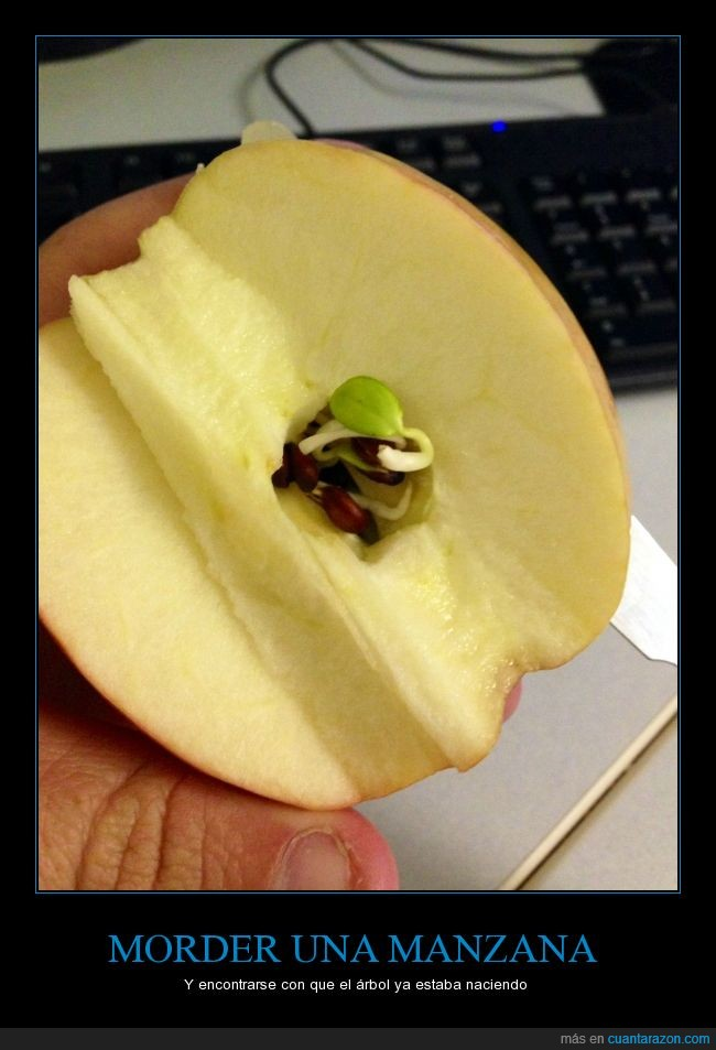 arbol,brote,comer,crecer,dentro,fruta,germinar,manzana,morder,raiz