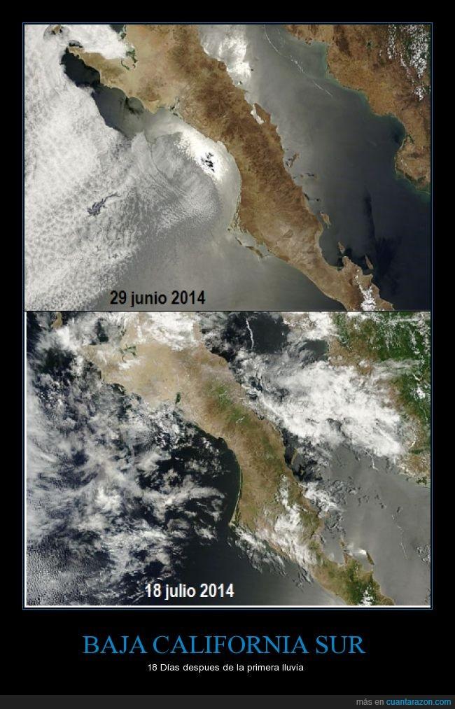 Baja California Sur,Desierto,Lluvia,Mexico,Paraiso,Peninsula,Sur de la peninsula,Vegetacion