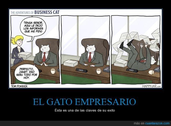 gato empresario,informe,janet,jugar,papel,secretaria,trabajar