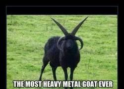 Enlace a Su grupo favorito es Children of Goatdom