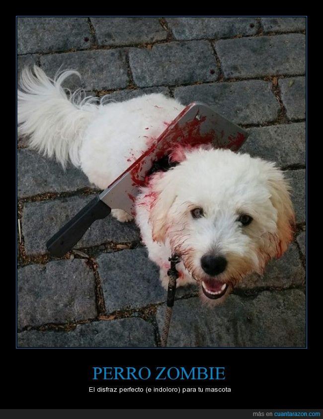 apocalipsis,can,clavado,cuchillo,halloween,muertos,perro,sangre,zombie