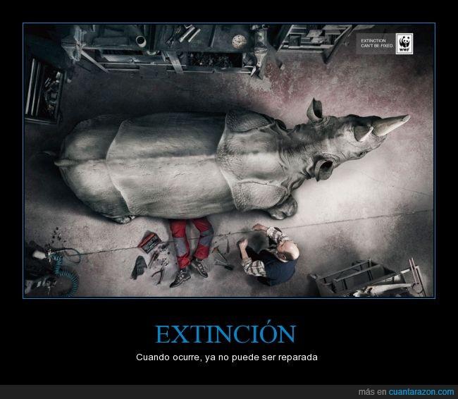 africa,animal,arreglar,especie,extincion,fix,mecanico,reparar,rinoceronte,wwf