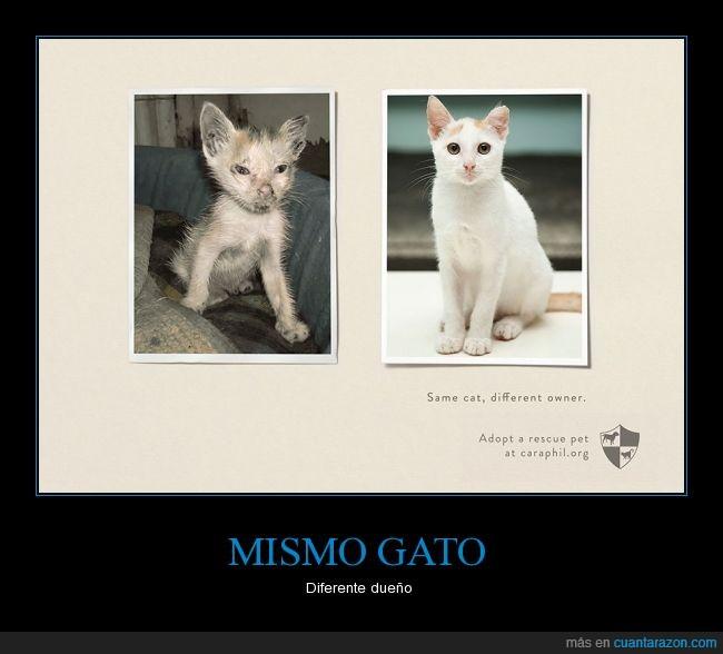 adoptar,cuidar,dueño,gato,mascota,rescatar,rescate,salvar,vida