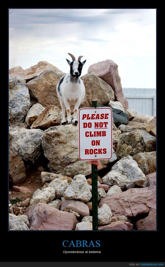 cabra,cabras,escalar,normal porque no sabe leer,prohibido,rebelde,rocas,subir