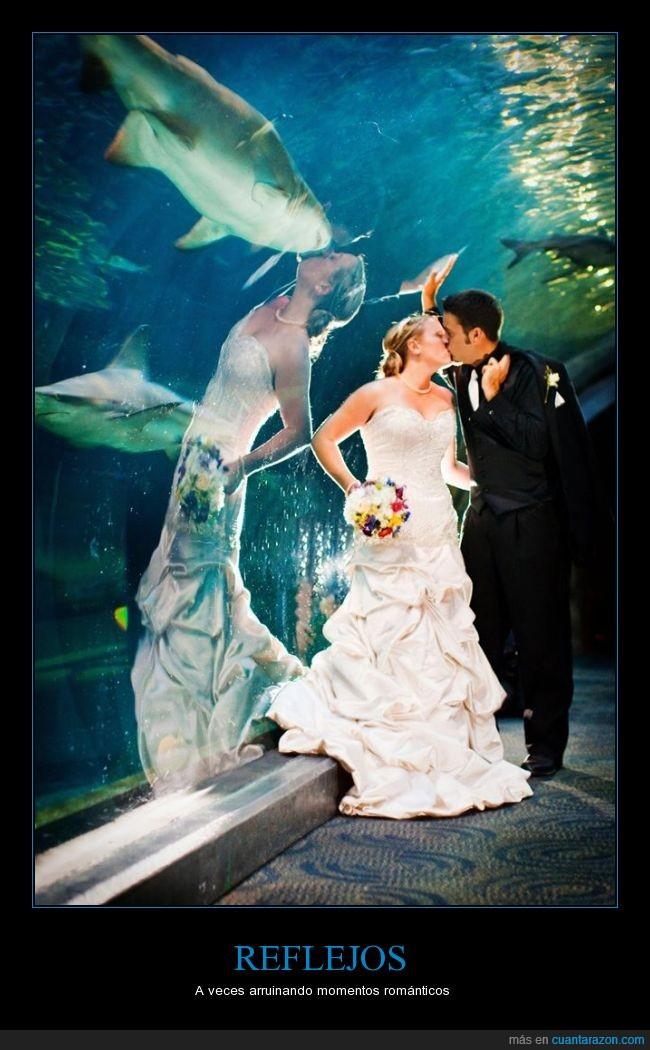 acuario,boda,el presupuesto para la boda era muy bajo,esposos,reflejo,tiburón