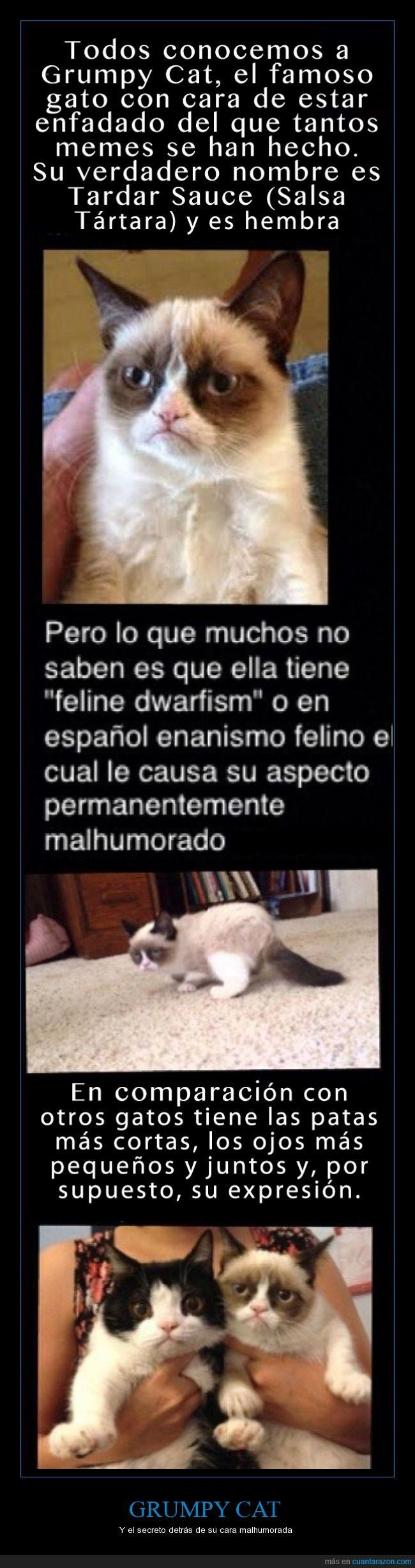 cara,enanismo,Gato,grumpy cat,malhumor