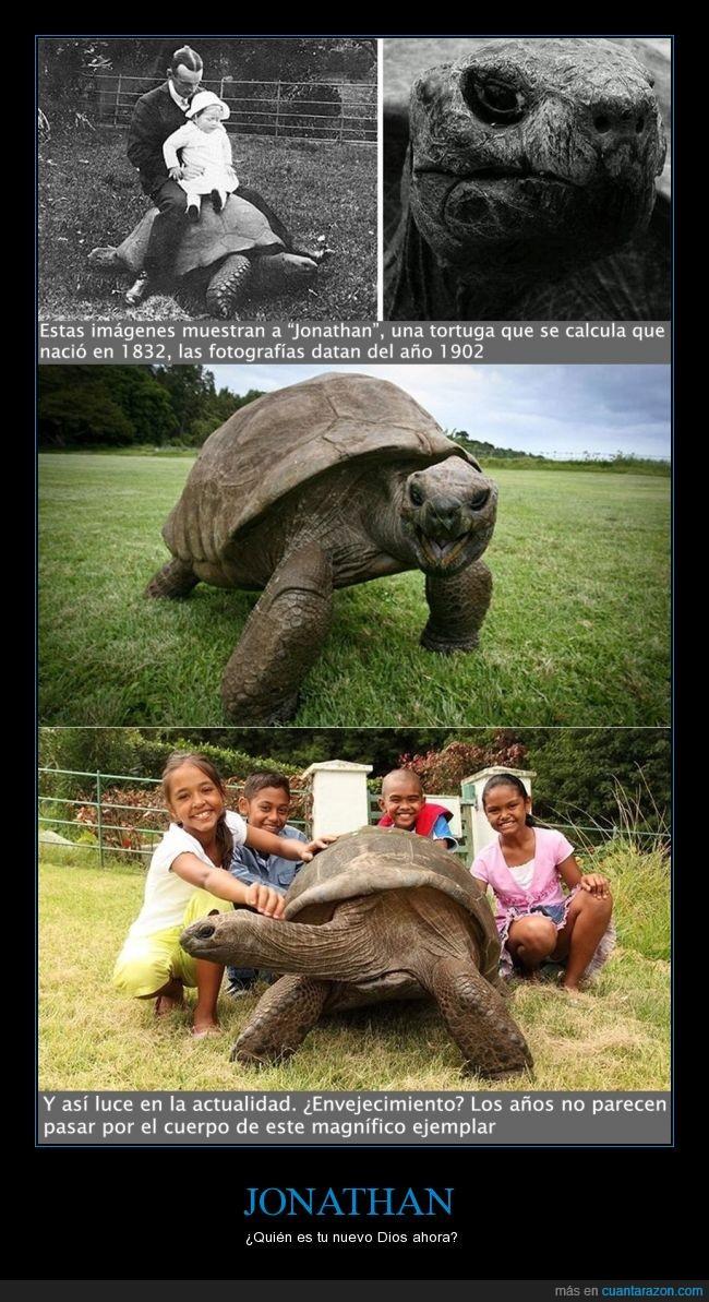Atlántico Sur,belleza,Gigantes Seychelles,Jonathan,longevidad,St Helena,tortuga