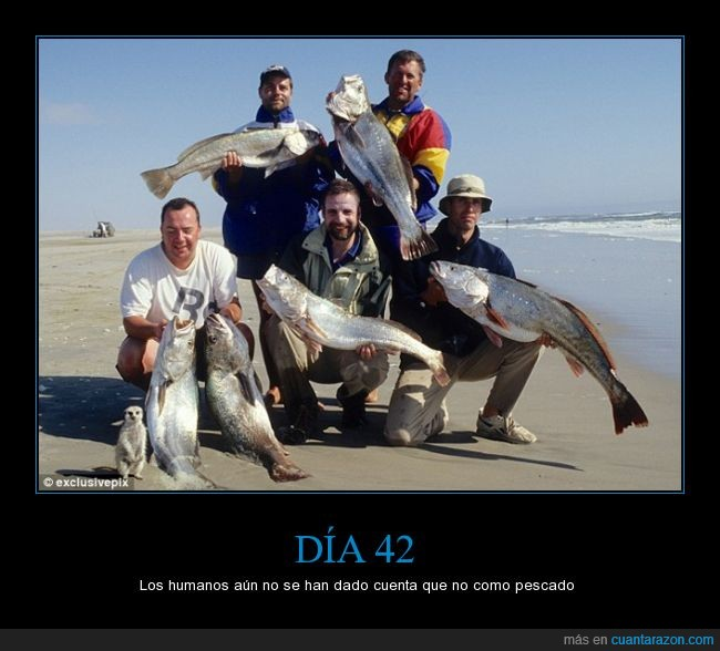 animal,foto,pesca,pescado,suricata,timon