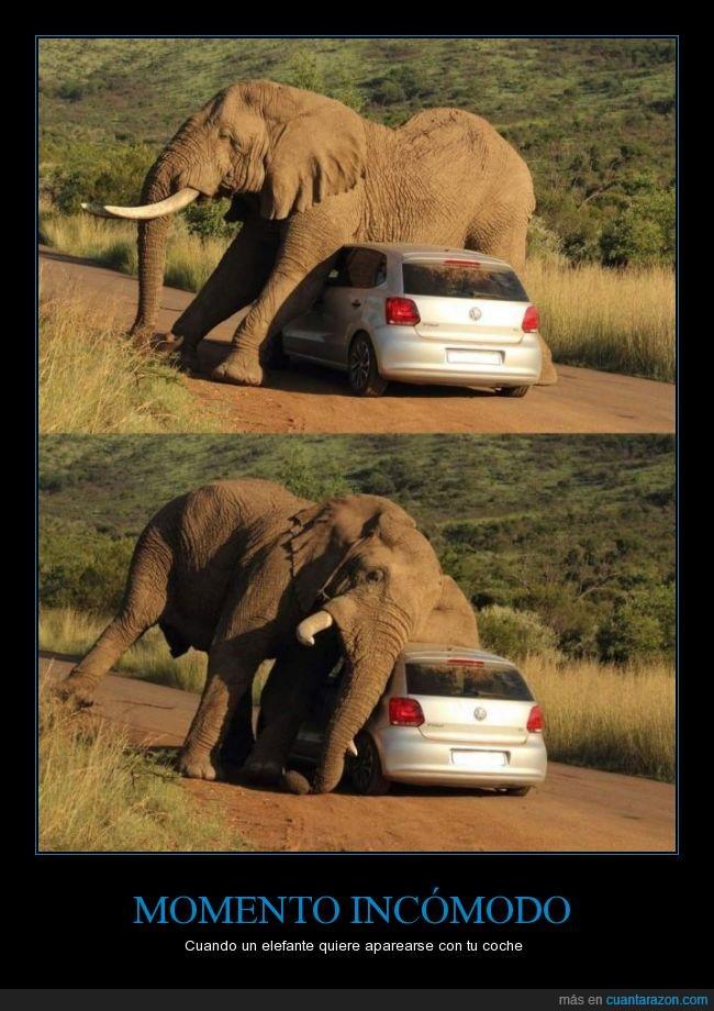 amor,aparear,elefante,polo,vw