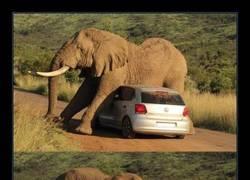 Enlace a Elefantes y coches