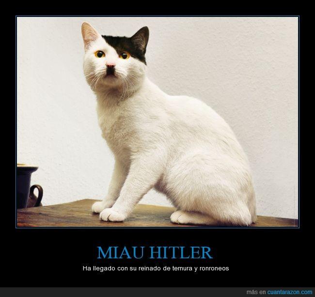 bigotito,gato,la primera vez que veo a un gato así,MIAU fürer