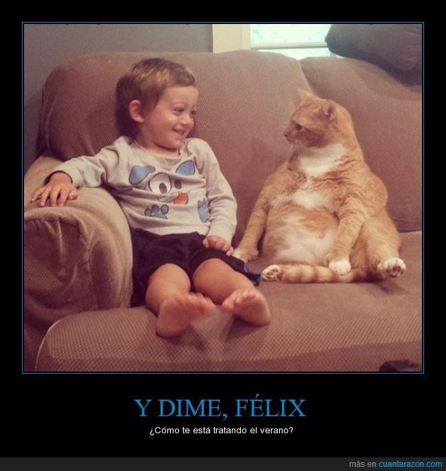 amiwitos,conversación,gato,niño,sofa