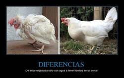 Enlace a ¿Ves la diferencia?