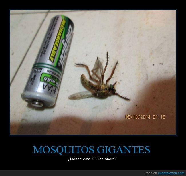 bicho,dónde deje mi pokedex,gigante,mosquitos,pila