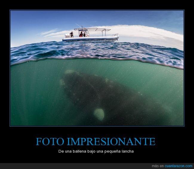 bajo,ballena,barco,impresionante,lancha