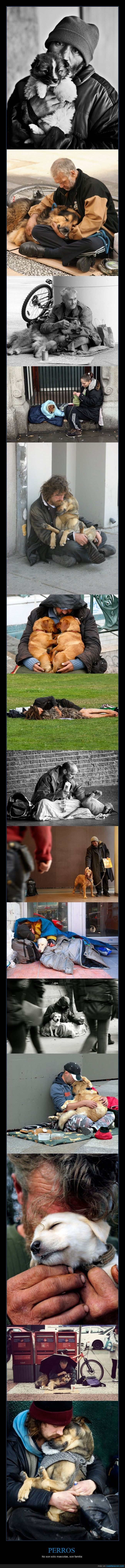 amistad,familia,lealtad,perros,personas sin hogar