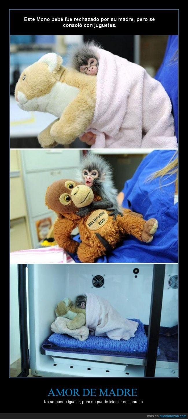 amor,ayudar,bebe,cachorro,igualar,madre,monito,mono,muñeco,peluche