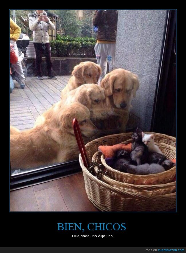 gatos,mirar,perros,perros y gatos,tienda