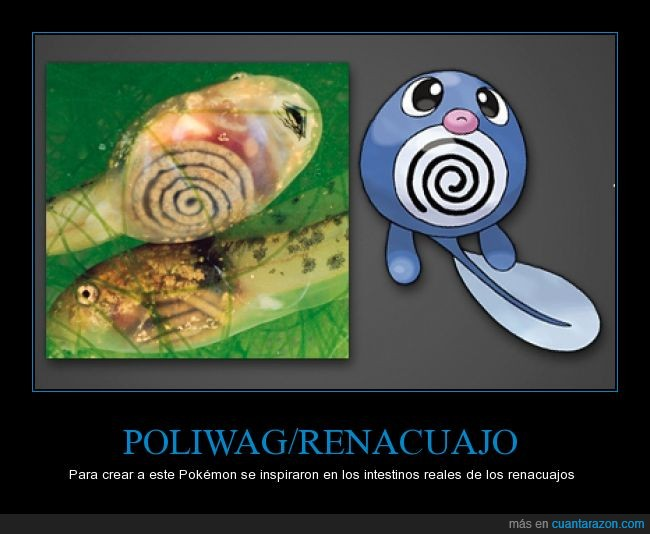 espiral,forma,inspiracion,pokemon,poliwag,rana,renacuajo