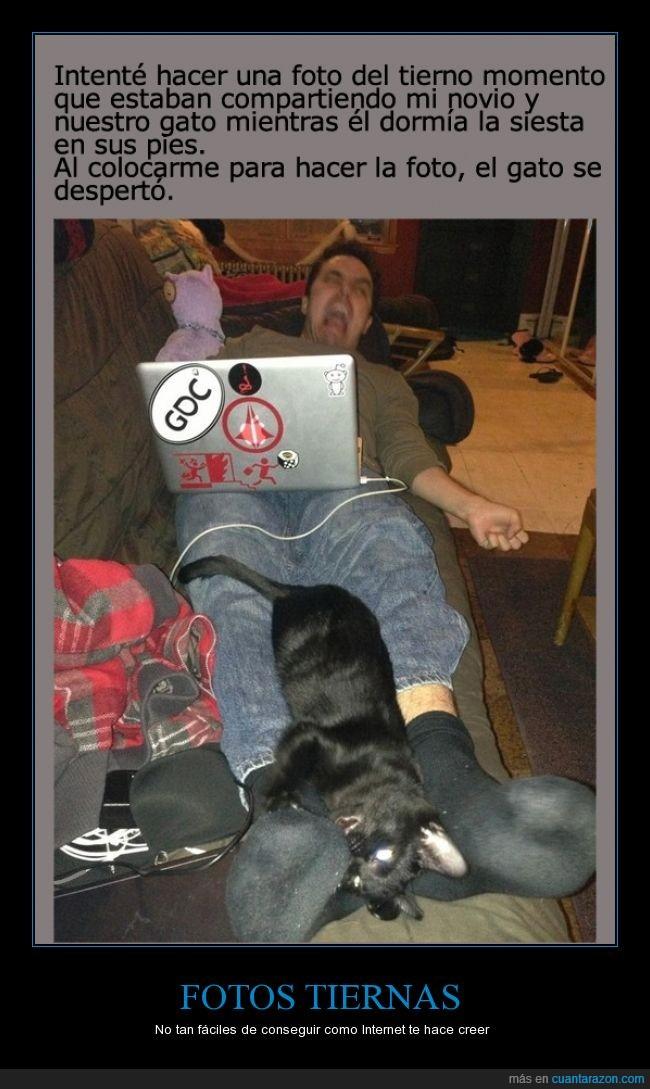 arañar,atacar,cara de asesino felino,dolor,dormir,foto,gato,morder,novio,pie,siesta,susto