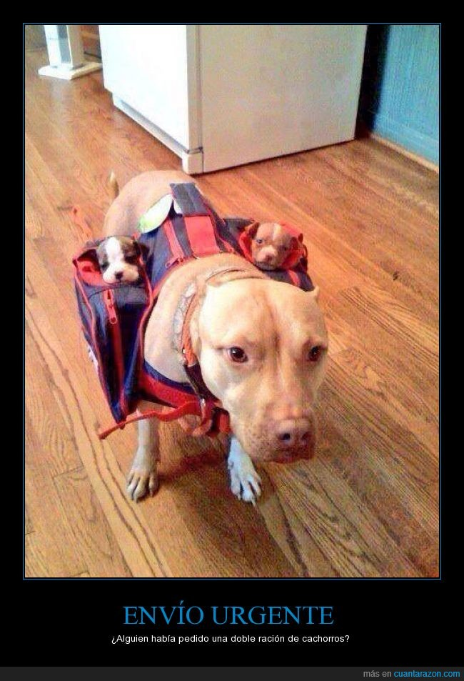 alforja,bebe,cachorro,hijos,llevar,madre,mochila,perra,perrito,perro
