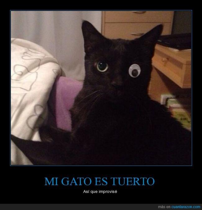 felino,gato,google,humor,ojo,pegatina,tuerto,utilería,vista