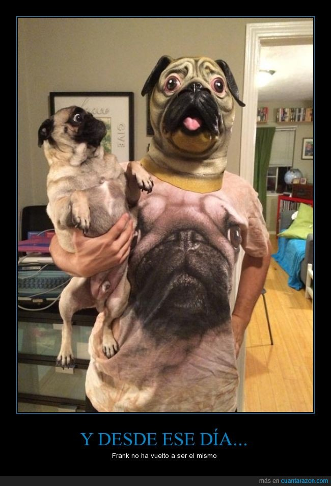 camiseta,carlino,disfraz,el mismo,Frank,mascara,Men In Black,perro,pug
